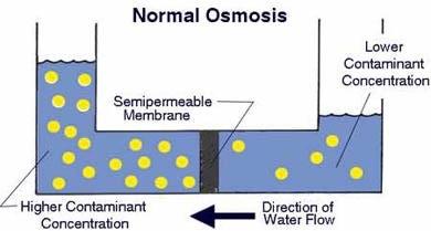 Нормална осмоза